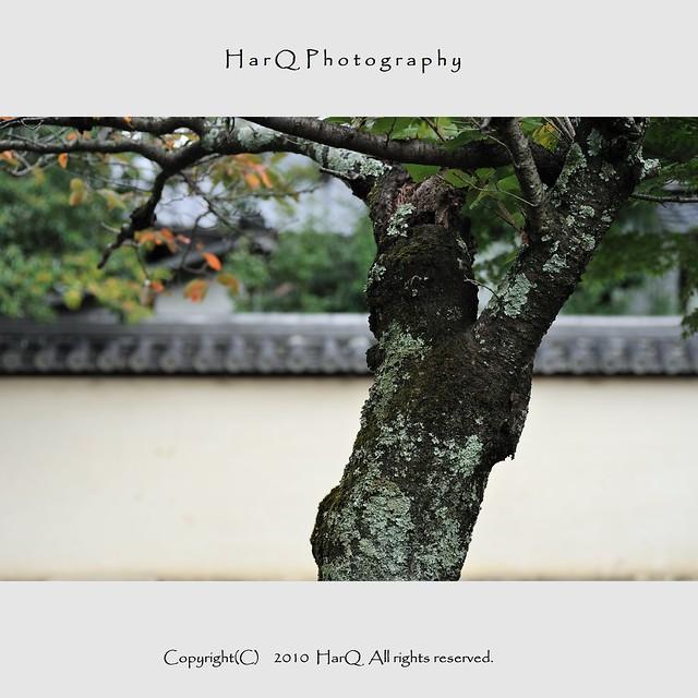 Scenery of Saidai-ji Temple *