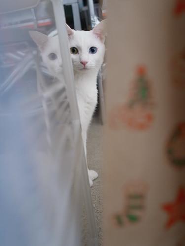 The Peeping Cat, Milk.