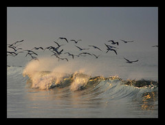Dawnwave (tanera) Tags: blue beach water birds animals contrast reflections waves flock abandon algarve anywhere silverlining naturesfinest abigfave colorphotoaward wwwtaneracouk httptaneracouk