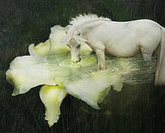 Daylily pond and pony! (Isabelle Ann) Tags: horse art digital caballo cheval jumping bravo vermont photographer graphic digitalart fantasy isabelle jumper hunter cavallo cavalo pferd equine equus paard horseshows hunterjumper mostbeautiful magicdonkey manchestervt dorsetvt equineart artx vermontsummerfestival artlibre isabelleann isabelleanngreen impressedbeauty equestrianart hunterjumpers dorsetsummerfestival dorsetpony equinephotographer fairytaledel phtoshopartdel imaginationdel artisticanimaldel fairytaleworlddel dreamyphotogimagdel hunterjumpershows artistichorse isabellegreen equitationart hunterjumperart dorsethorseshow hunterjumperphotography hunterjumprphotographer isabellegreenphotography isabelleannphotography isabelleannhorses mostbeautifulhorses equineartist hunterjumperphotographer hunterjumperphotograhy