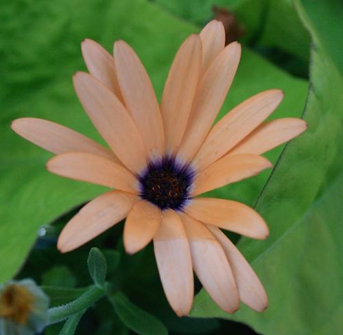 Toronto Flower