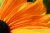 flirtatious (Sabinche) Tags: orange flower interestingness bravo explore interestingness9 sabinche excellence interestingnesspage1 magicdonkey mywinners diamondclassphotographer flickrdiamond explore02082007