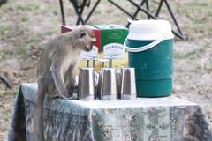 Monkey food