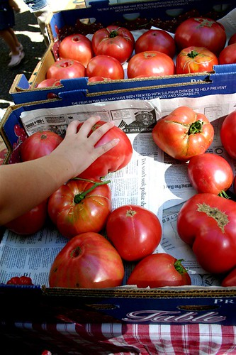 Tomatoes so huge!