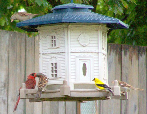 A Cardinal, a sparrow and a male goldfinch sat down at the bar...