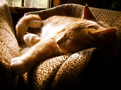 Happy Sleepy Sunday (Gail S) Tags: cat pinky spacecat catsandwindows bestofcats