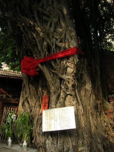 台南遊-三百年大樹公