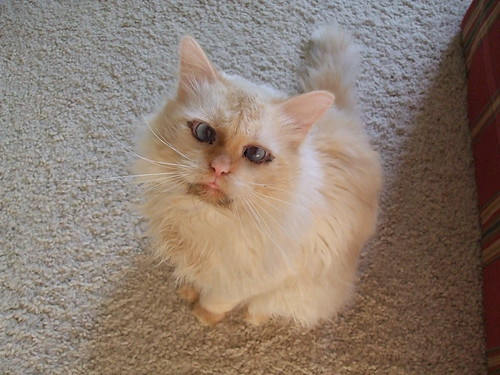 cute cross eyed kitten cat pic