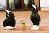 [Outtake #11] Die Danbos und die Holzkrähen / The Danbos and the wooden crows (_vonStein) Tags: toys amazon outtake danbo project365 spielzeuge revoltech flickrcolour projekt365 danboard