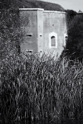 Long Reeds, Fort Brockhurst Moat
