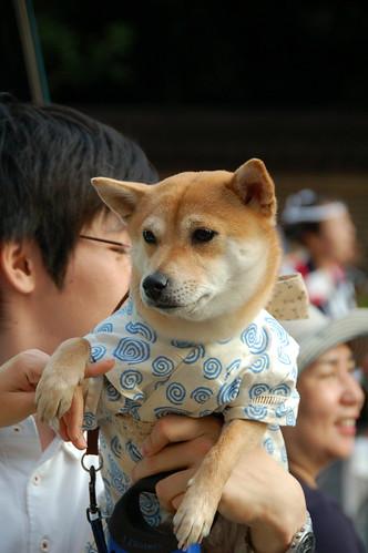Dog with kimono