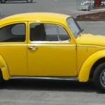 Escarabat groc thumbnail