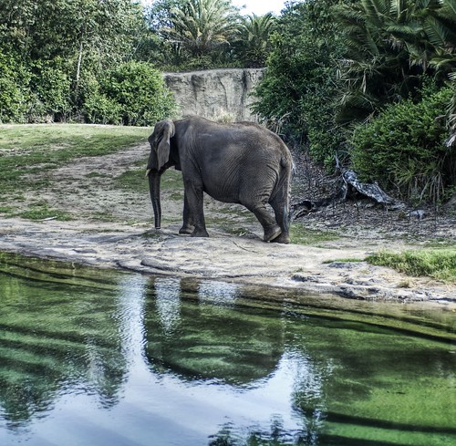creative commons hi-res photo of the day:  Elephant Reflections (2618 x 2558)