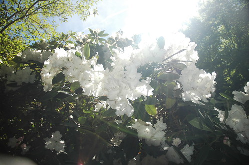 Filoli Garden - 艾小柯 - 四处游荡的艾小柯