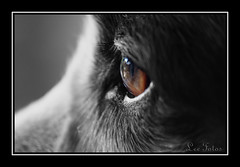 Sad Natured Eyes - by Leefotos