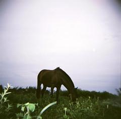 holga - horse