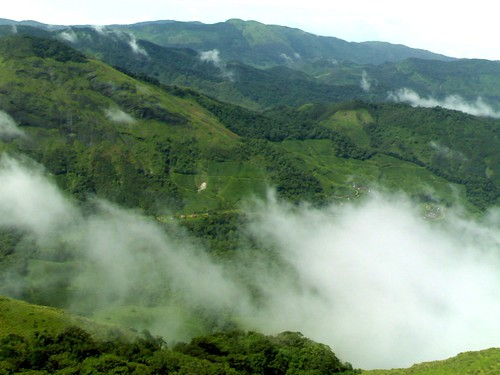 Munnar - nature beauty