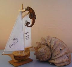 Sinop-Turkey (econoktay76) Tags: sea horse turkey flickr trkiye walnut clam blacksea karadeniz deniz cutter ceviz hippocampus sinop oktay istiridye denizat kotra econoktay76 econoktay