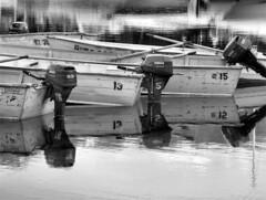 "...""13 5 15 ... 13 2 12""... (dflora_pix) Tags: lake marina sunrise day8 grandtetonnationalpark wyco07 1003024y61351513212ed"