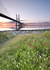 The Dawn of PoPPies (CResende) Tags: flowers portugal sunrise spring nikon lisboa poppies tejo d300 pvg riotejo sigma1020 parqueexpo hitechfilters cresende