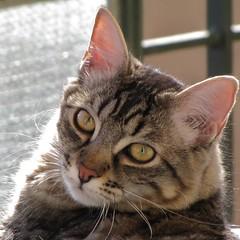 leo (archifra -francesco de vincenzi-) Tags: italy cat chat leo gato miao gatto ohhh micio molise isernia fiatlux otw kissablekat bestofcats flickraward archifraisernia francescodevincenzi