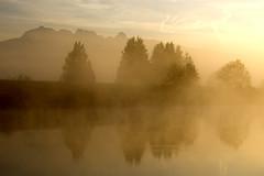 Dike Morning 4 (showbizinbc) Tags: mist misty fog sunrise river bc earlymorning mapleridge dike pittmeadows flickraward artistictreasurechest