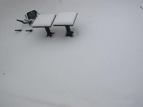 neige et chat 6