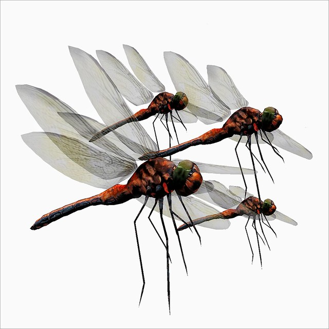 %napoliy% Dragonfly