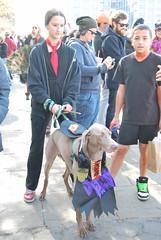 Harry Potter Dog (thoth1618) Tags: nyc newyorkcity costumes dog pet pets ny newyork halloween animal animals brooklyn costume october brooklynheights brooklynheightspromenade parade promenade gothamist halloweenparade 2010 howloween brooklynpromenade brooklynny dogparade dogcostumes dogcostume dogincostume brooklynusa muttsquerade petsincostume dogincostumes brooklynheightsblog 103010 petincostume animalsincostumes animalincostume halloween2010 october302010 perfectpawsinc the8thannualhowloweenmuttsqueradeparade