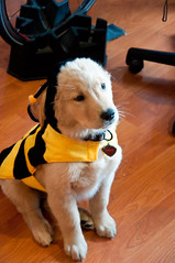 Sadie the Bumble Bee