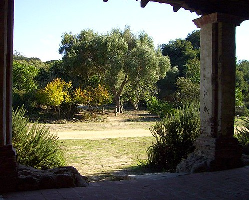 La Purisima Olive Trees