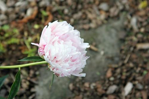flower 005