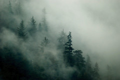 Tongass Mist (andertho) Tags: mist alaska forest tongassnationalforest juneau nationalforest in2 tongass out2 in4 out3 in10 in3 in6 out4 in5 savedbydmu in9 out5 out6 in7 ostrellina
