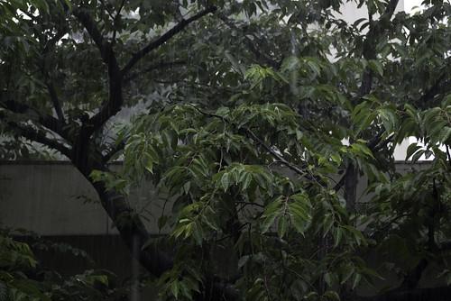 Rain_2007-06-10N001