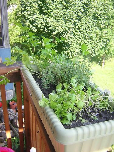 new herbs 061907