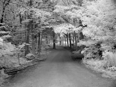 Cottage Road (spiffytumbleweed) Tags: digital ir michigan desaturated csa digitalinfrared copyrightedallrightsreserved