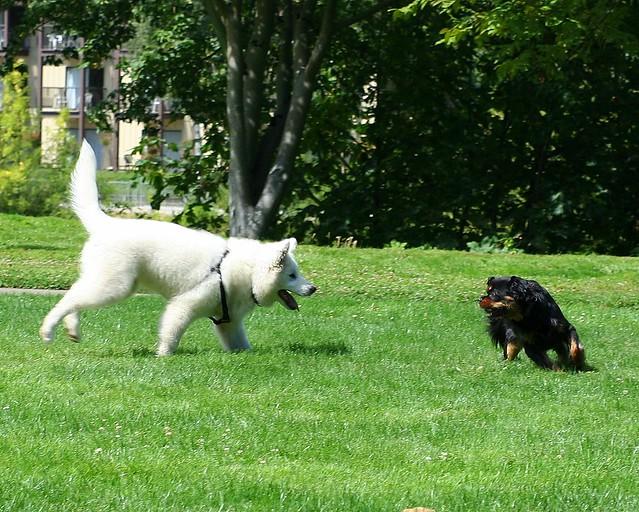 Dog Play 5