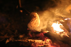 Toasted Marshmallow - by padraic woods