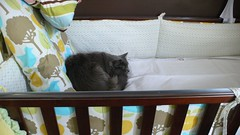 Cat's Cradle (Kelly Sue) Tags: cat messy crib inprogress nusery