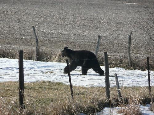 bearbureaucounty2
