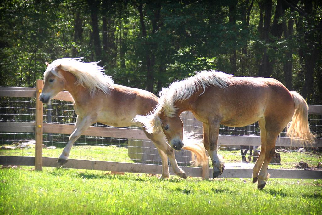 horses 121x