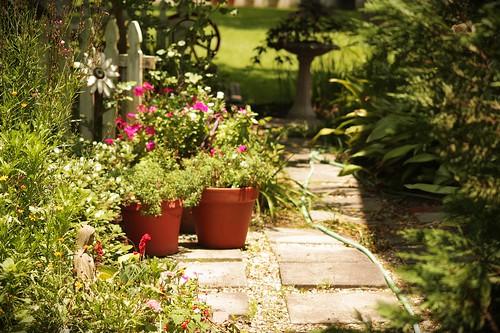 my mil's side yard garden