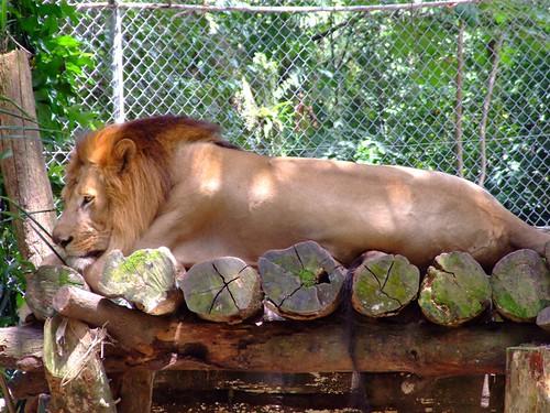 zoo 066