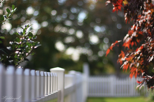 Faux Fall Fence