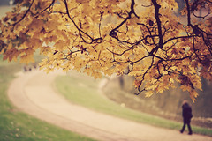 a walk (besimo) Tags: city autumn fall leaves poem f14 herbst walimex bielefeld rilke awalk 85mm14 d700 besimmazhiqi