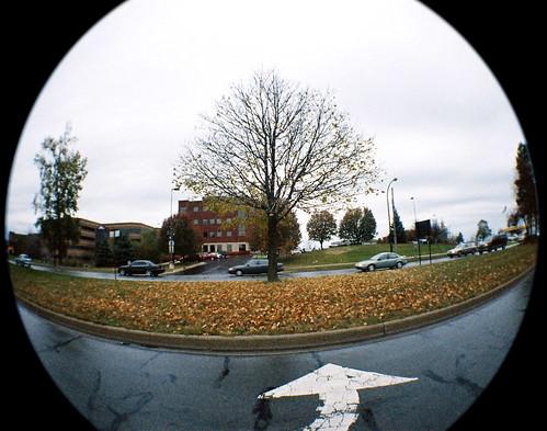 45/52: a tree grows in Ann Arbor