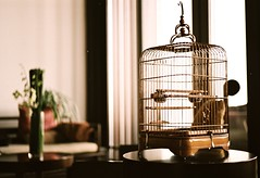 Cage without bird. (nicoyangjie) Tags: nov recent