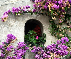 ... (chpaola) Tags: pink italy brown green window wall grey purple explore 51 sirmione gardalake flowwer lagaodigarda dwwg