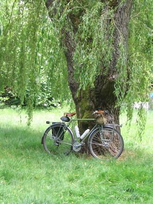 Atlants under a willow tree in Bellevue
