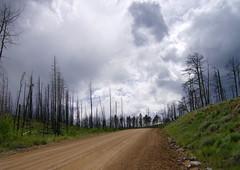 Hayman Burn Area